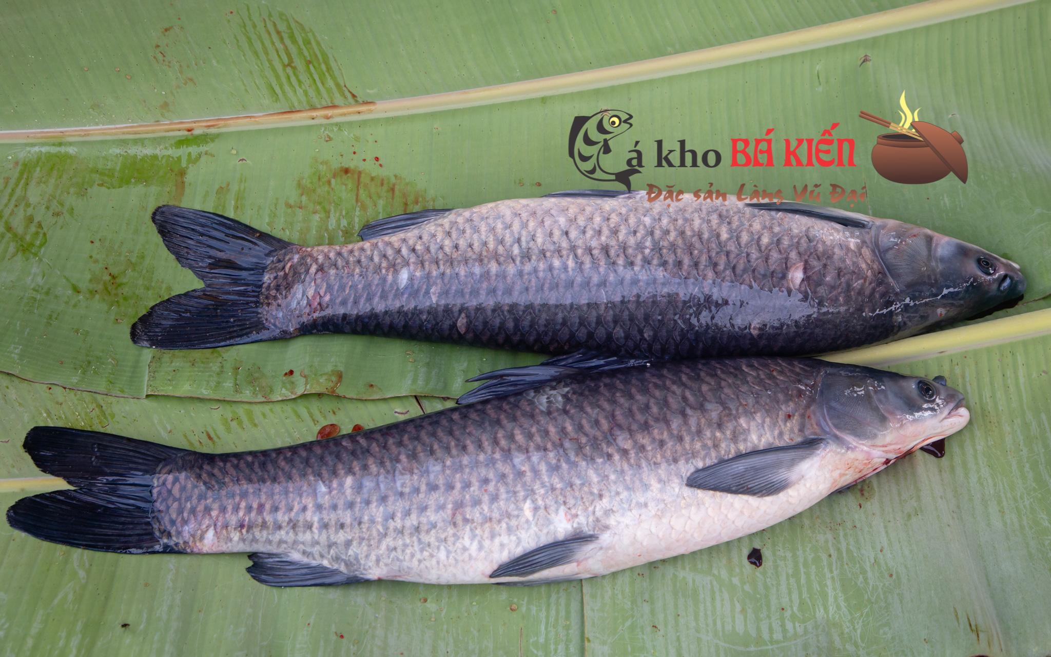 Cá kho phải là cá trắm đen nuôi ốc có trọng lượng tối thiểu 3kg trở lên